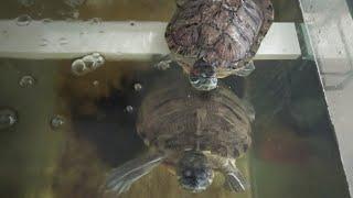 npmps的烏龜命名活動相片