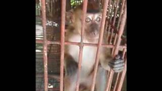 monkey snatches camera in bohol philippines
