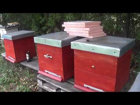 Подготовка пчёл к зиме.