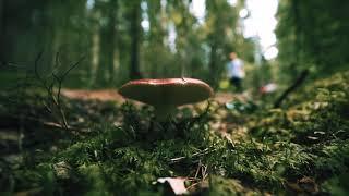 Finnish nature is now at its greenest and offers a range of different opportunities. Soon it will be time to go berry and mushroom hunting - nature's finest delicacies are just waiting to be picked! Take a look at our recommended options for hiking and exploring nature and make sure you have a mushroom handbook with you: https://visitjyvasky.la/explore-nature The video was filmed from the top of Hyyppäänvuori.   Production: Aistikko Visuals (Eemeli Nättinen)  ------------  Suomen luonto on nyt vihreimmillään ja tarjoaa paljon erilaisia mahdollisuuksia. Marjastus- ja sienestysaika alkaa olemaan käsillä ja luonnon herkut odottavat poimijaansa. Tutustu siis Jyväskylän seudun luonto-ja retkeilymahdollisuuksiin ja varaa mukaasi vaikkapa sienestyskirja: https://visitjyvasky.la/retkeily-mahdollisuudet   Video kuvattu Hyyppäänvuorelta.  Tuotanto: Aistikko Visuals (Eemeli Nättinen)