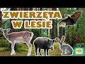Leśne zwierzęta - Nauka zwierząt dla dzieci po polsku - Odgłosy zwierząt