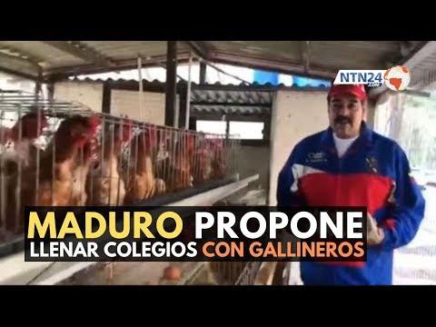 """""""Un millón de gallinas para los liceos"""": la nueva idea de Nicolás Maduro"""