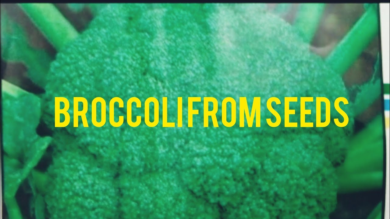 How to Grow Broccoli from Seeds Easily at Home. - YouTube