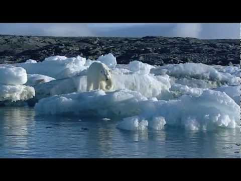 Walrus attacks kayak