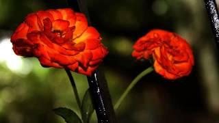 Слушать лучшую русскую музыку про любовь онлайн(СОВЕТУЮ ПОСЛУШАТЬ музон — это чудо какое-то!, 2015-03-23T12:01:55.000Z)