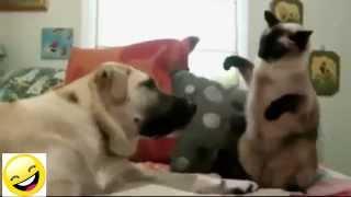 Videos de Risa   Animales   Perros y Gatos Chistosos caidas chistosos