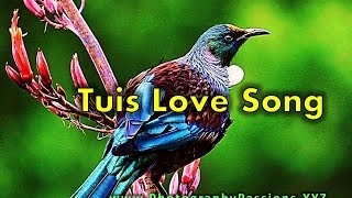 Tui bird calls & sounds at carter observatory: sounds, communication and mating of nz tuis in the bush. enjoy relaxing, soothing, beautiful b...