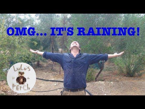 Rainwater Harvesting in the Desert   Greening the Desert
