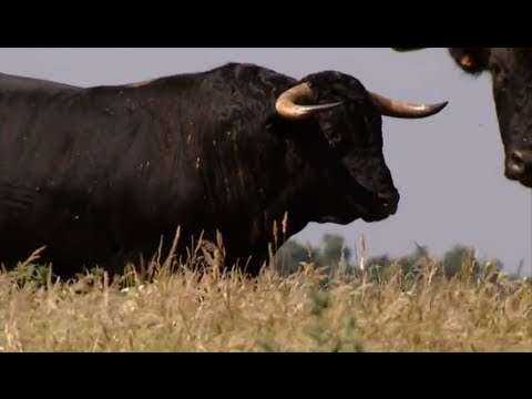 The bull, the most powerful animal and symbolic of the earth