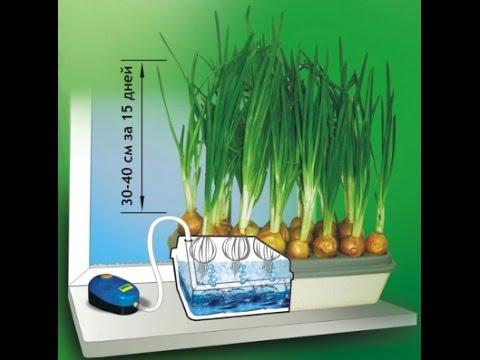 Выращивание зеленых на гидропонике 150