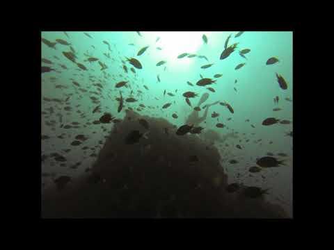 Sri Lanka Diving: Hikkaduwa, Black Coral Point.