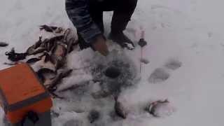 зимняя рыбалка в Республике Карелия 2014