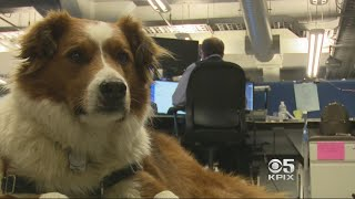 Mixed-Breed Mutt Puts Dog DNA Tests Through Their Paces
