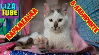 Лабиринт #5 для кошек 😺 Карамелька проходит новый лабиринт 😂 \ LizaTube