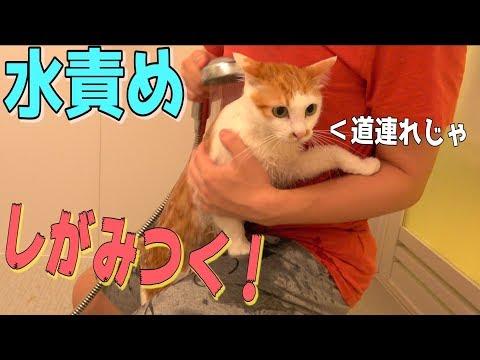 猫を水責めしたら飼い主にしがみついて大変なことになったwww