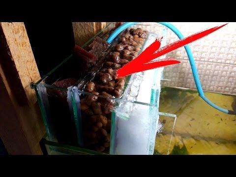Что такое донный фильтр для аквариума своими руками фото 101