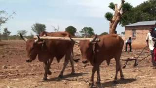 Conservation Agriculture in Zambia