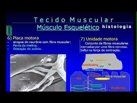 Video Aula de tecido muscular UFPB.mp4