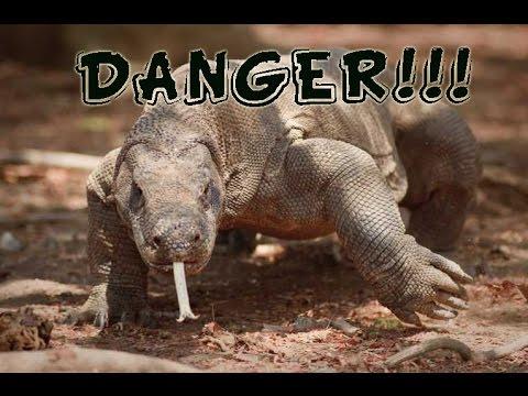 Top 10 Most Dangerous Reptiles - YouTube