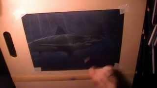 Speed Drawing - Shark