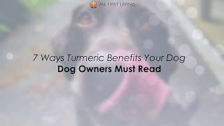 Turmeric Benefits For Dogs | 7 Ways Turmeric Can Benefit Your Dog!