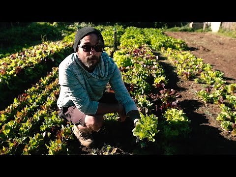 URBAN MICRO FARMING! Home Grown Business with Nuke City Veg
