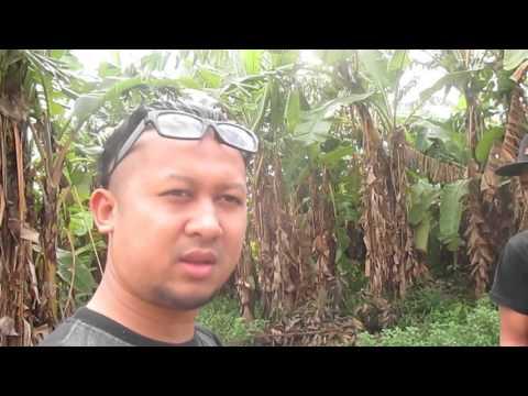 Criminal's Chaos road to Metal Blast 2014 Jombang