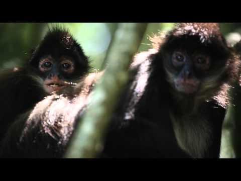 Visit Monkeyland