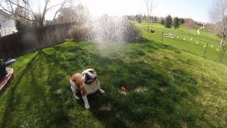 Meatball Vs Sprinkler Gopro