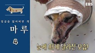 세상에 나쁜 개는 없다 - 얼굴을 잃어버린 개 마루2_#002