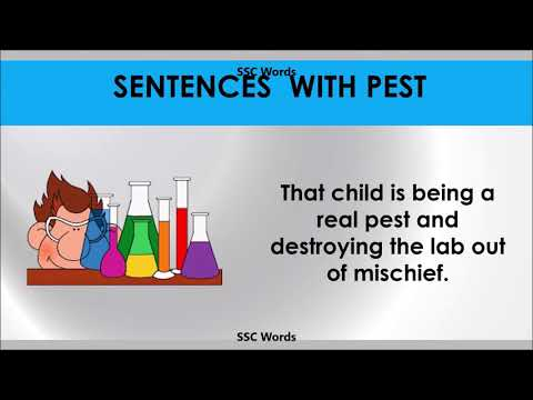 pest---improve-english---meaning-and-5-sentences---gre-/-cat-/-gmat-word---ssc-words