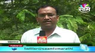 Rajesh Chavan's  Sweet corn (Madhu Makka )success story