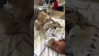 Dog helps cover baby with a blanket!