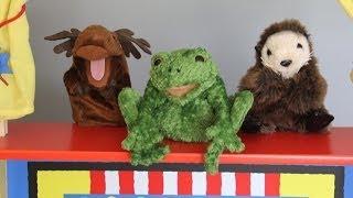 funny animal video