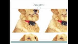 Esky Rechargable Lcd Remote Control Dog Training Shock Collar Review