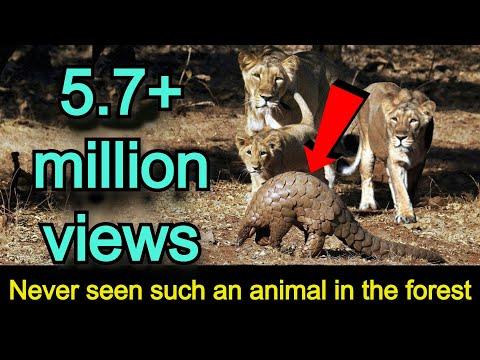 जंगल में ऐसा कुदरत का करिश्मा कभी नहीं देखा Never seen such miracle in the jungle