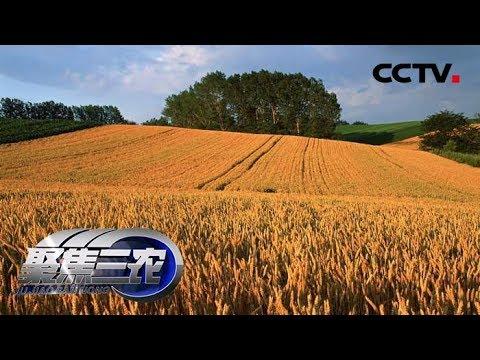 《聚焦三农》 谁来保障我的麦收订单 20190708 | CCTV农业