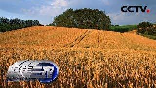 《聚焦三农》 20190708 谁来保障我的麦收订单| CCTV农业