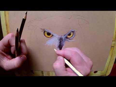 Rysowanie puchacza / Drawing eagle owl with crayons