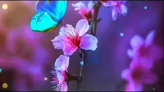 Kachi doriya Dj song whatsapp status best MP3 song