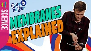 Science experiment | How membranes work