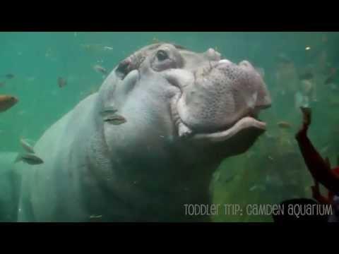 Adventure Aquarium Camden New Jersey | Toddler Trips