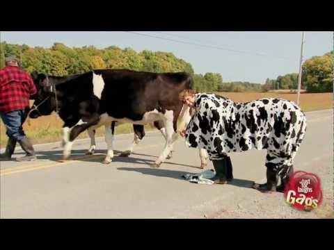 Most Wanted Cow Fugitive Prank