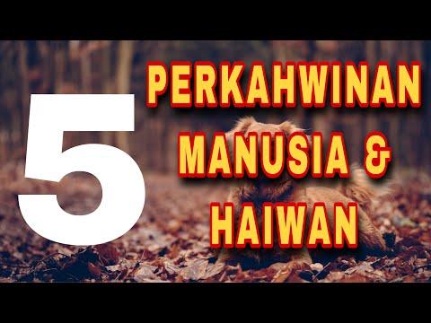 5 PERKAHWINAN MANUSIA & HAIWAN! PELIK TAPI BENAR!!