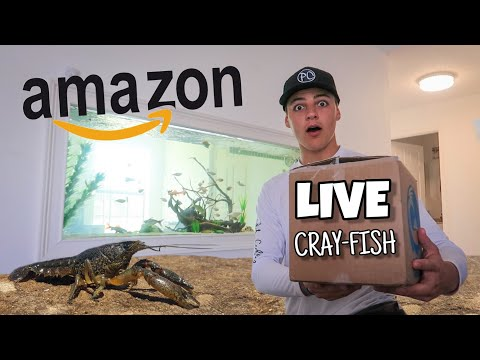 PURCHASING LIVE CRAY-FISH On AMAZON!!!