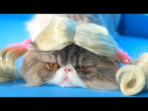 Wigs - Shortest Way To Turn Your Pet Into Instagram Star!