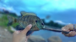 SIGHT Fishing for TINY/BIG Bluegill! (Mom's First Time!)