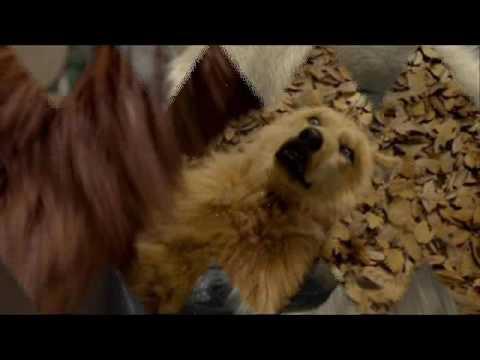 Vérfarkasok és farkasok filmekben letöltés