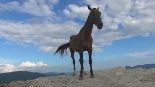 Лошади на горных вершинах Геленджика