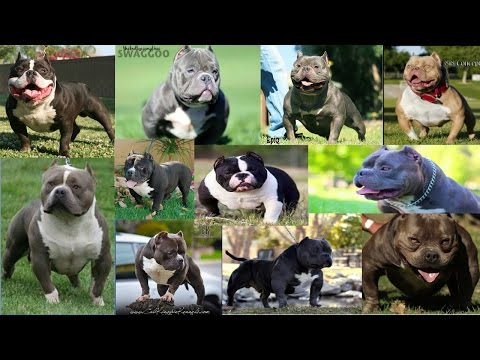 Top 11 Infamous American Bullys You Need To Know!!!
